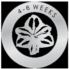 bloeitijd 4 tot 6 weken