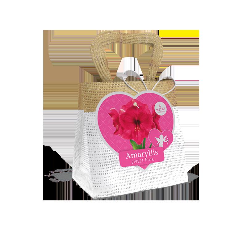 Love range bag amaryllis sweet pink for Amaryllis sweet pink