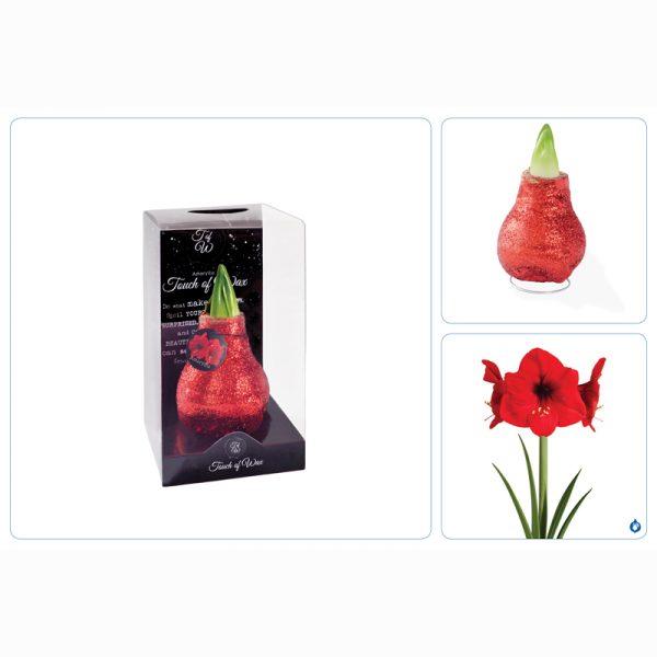 gewaxte amaryllis rood drieluik