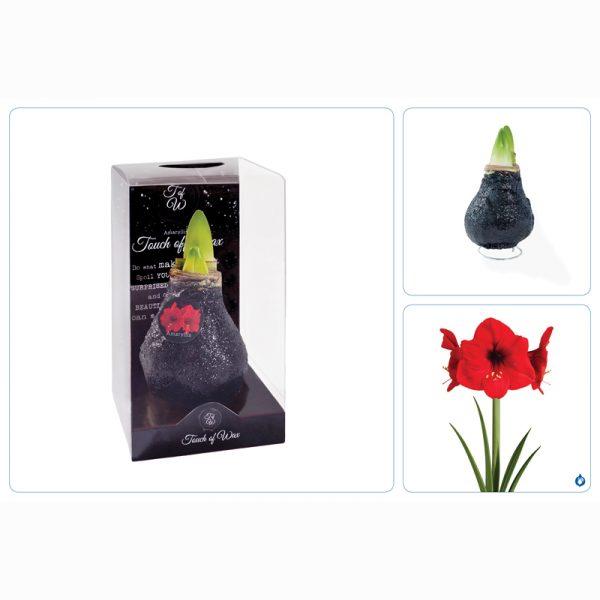 gewaxte amaryllis zwart drieluik