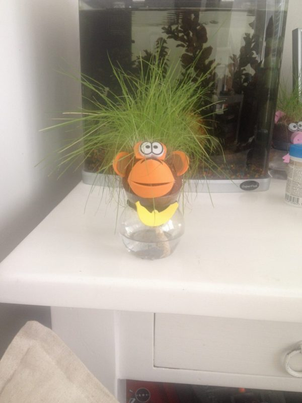 Animal Grass Head aap