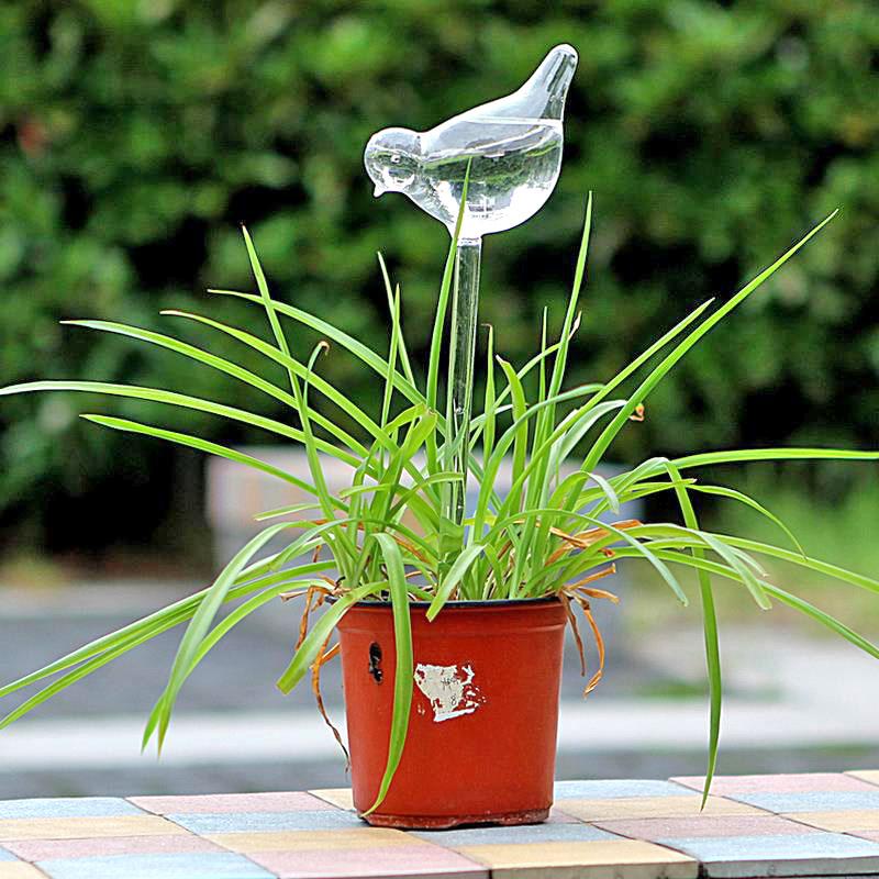 planten watergever vogel in pot buiten