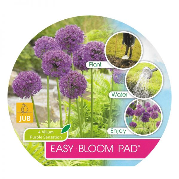 easybloompad allium purple sensation