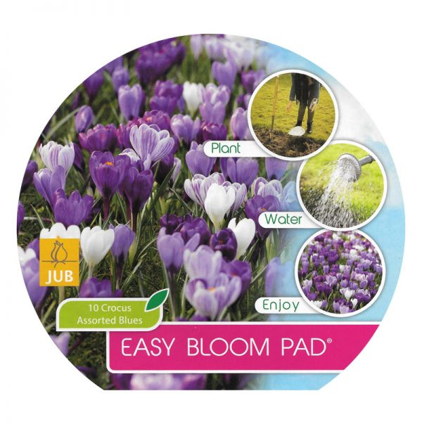 easybloompad crocus assorted blues