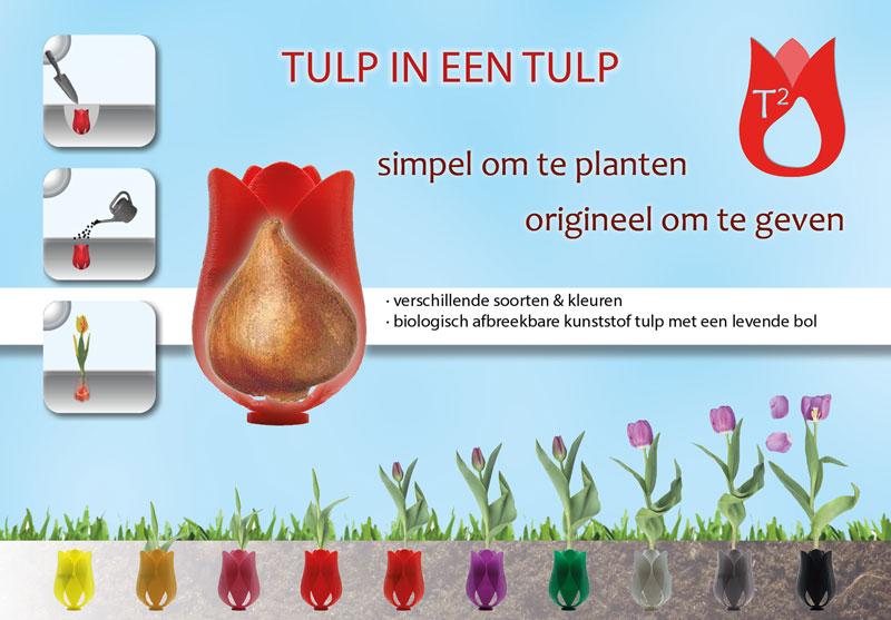 tulp in een tulp promotie
