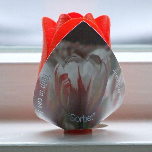 tulp sorbet oranje achterkant