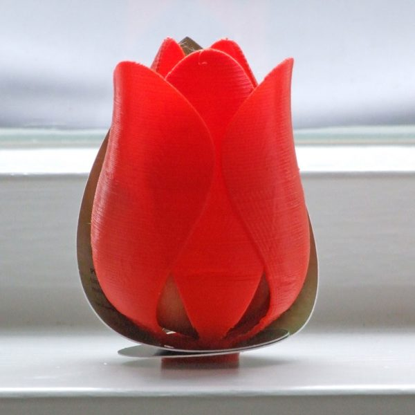 tulp sorbet oranje voorkant