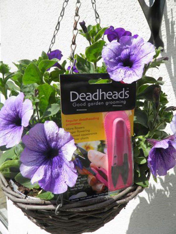 bloemenschaartje deadheads roze in hanging basket
