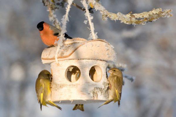 vogelvoederhuisje van berkenhout