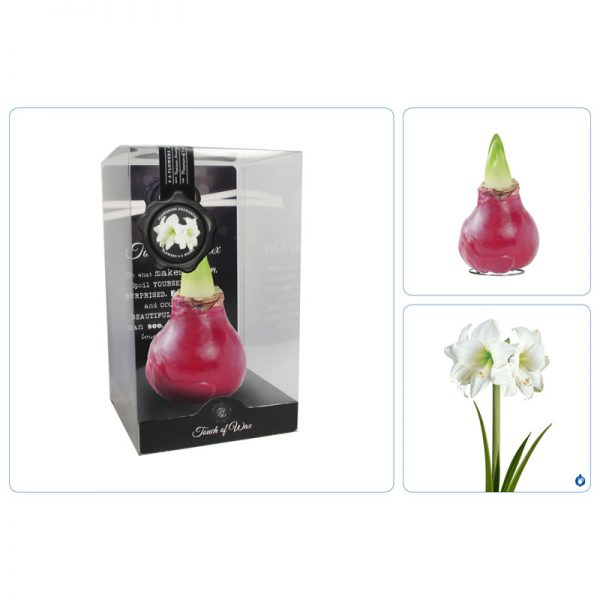 Touch of Wax Amaryllis Rood Gloss (wit)
