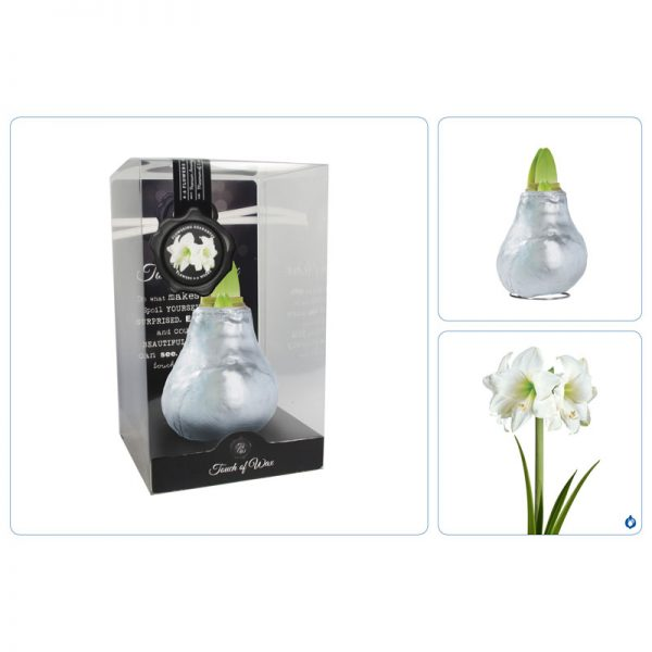 Touch of Wax Amaryllis Zilver Gloss (wit)