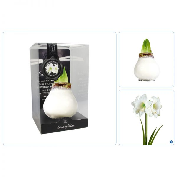 Touch of Wax Amaryllis Blanc Gloss (wit)