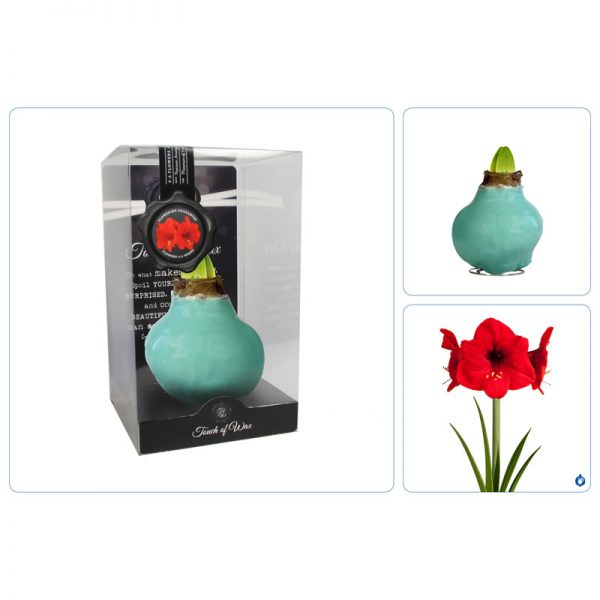 Touch of Wax Amaryllis Vintage Groen Gloss