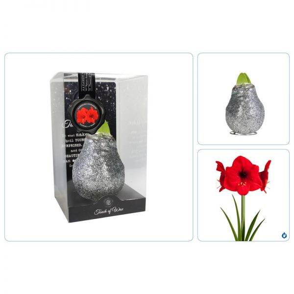 Touch of Wax Amaryllis Zilver Magic