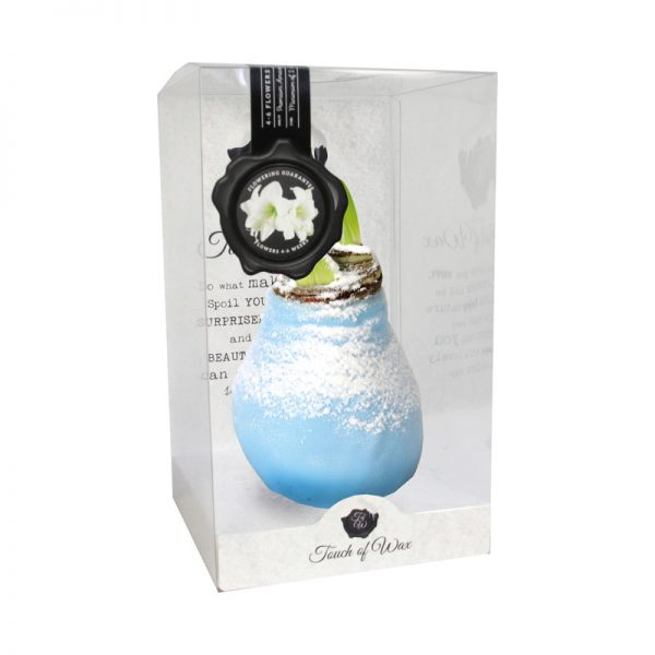 Touch of Wax Amaryllis Ice blauw Snow (wit)
