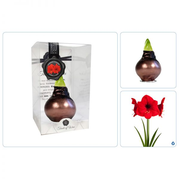 Touch of Wax Amaryllis Donker Koper Glamour