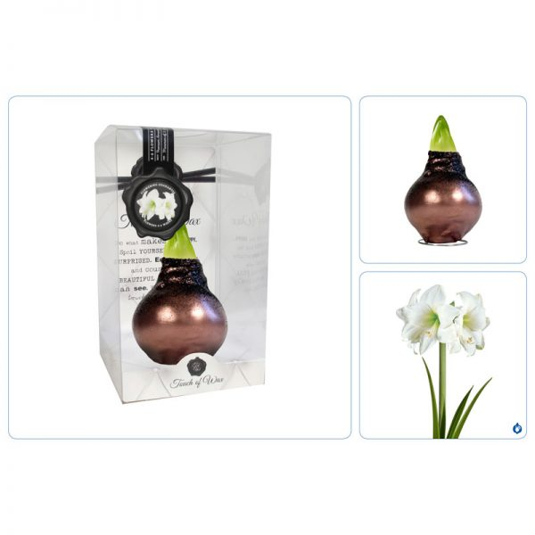 Touch of Wax Amaryllis Donker Koper Glamour (wit)