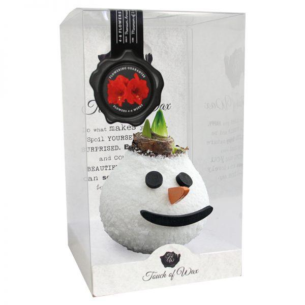 Wax Amaryllis Sneeuwpop verpakt