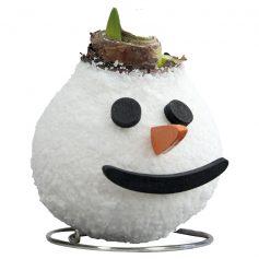 Wax Amaryllis Sneeuwpop