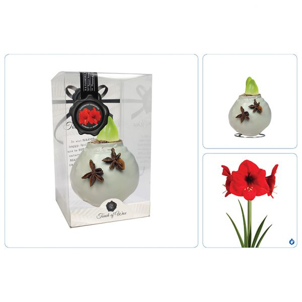 Wax Amaryllis Grijs Celebration collage
