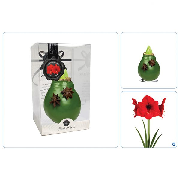 Wax Amaryllis Groen Celebration collage