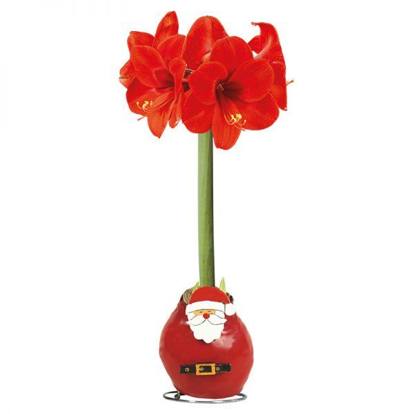 Wax Amaryllis Kerstman met bloem